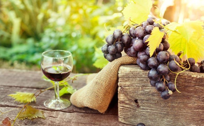 Wine Tours in Paros Greece